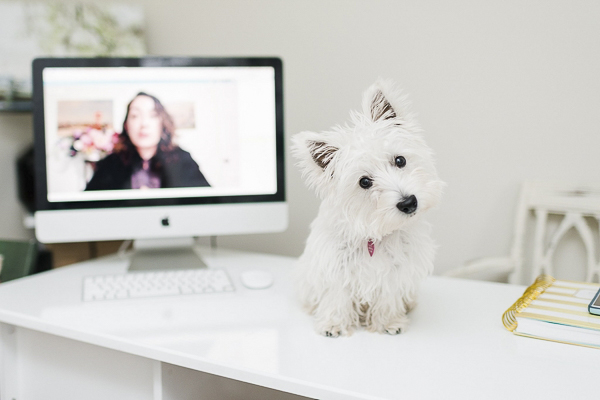 © Megan Travis Photography |Westie on desk, dogs on furniture