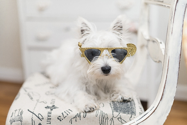 Megan Travis Photography, Westie wearing gold triangular sunglasses