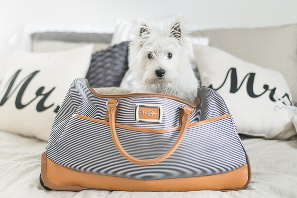 © Megan Travis Photography Westie in navy striped travel bag
