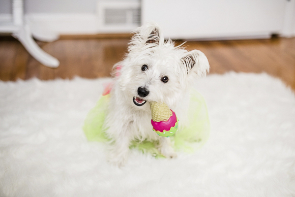 Megan Travis, Barley the Westie-chewing ice cream toy