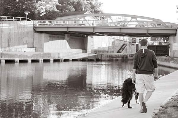 Bernese Mountain Dog, teen walking at canal lock 24
