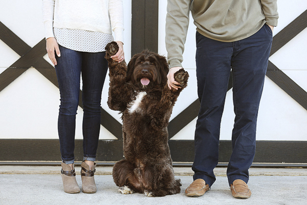 © Two Chics Photography | Labradoodle sitting pretty and holding hands