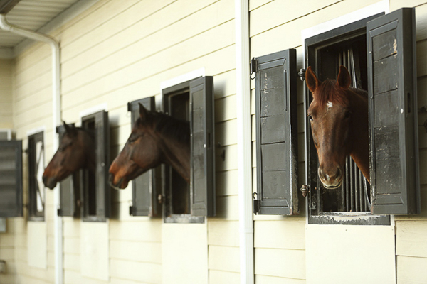 © Two Chics Photography | horses looking out of barn