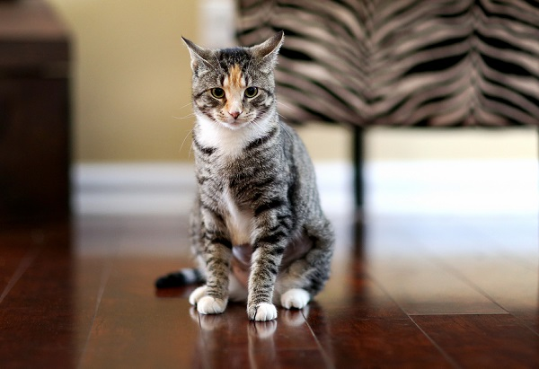 lifestyle cat photography, cat sitting on hardwood floor, caturday