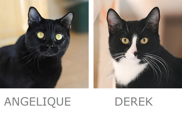 Angelique & Derek Adoptable Cats from Best Friends Animal Sanctuary