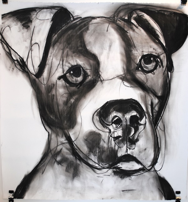 ©Cyrus Mejia | pit bull charcoal study, Aztec Charcoal Drawing, Raven's Heart Gallery, Kanab, Utah