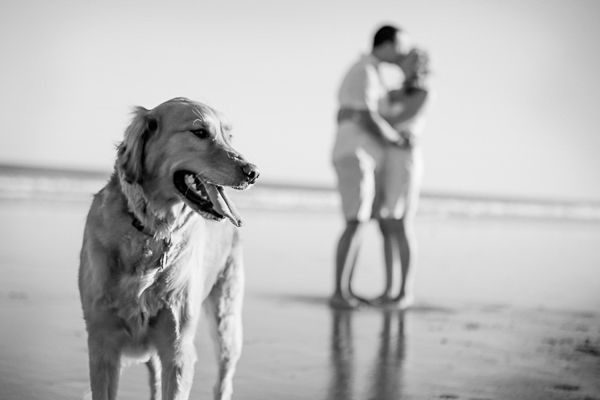 Golden Retriever on beach, couple in background, black white dog photography