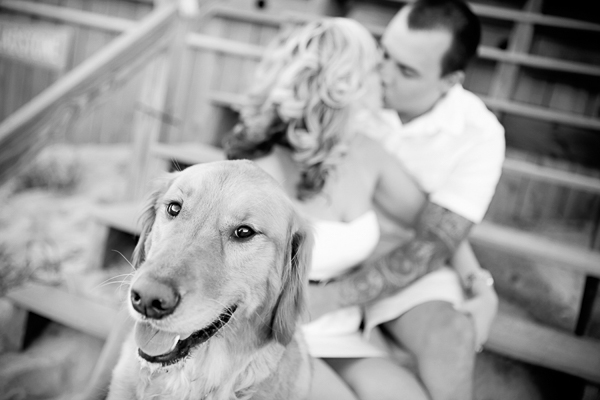 Golden Retriever, black white engagement photos