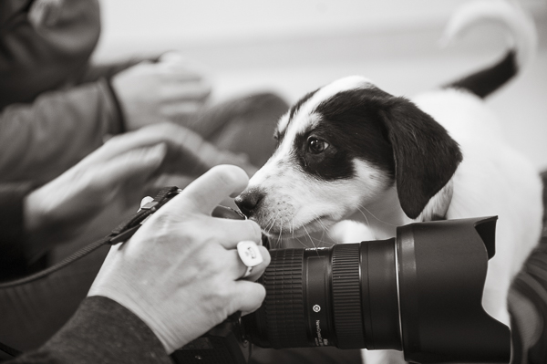 puppy investigating big camera, Best Friends Animal Sanctuary