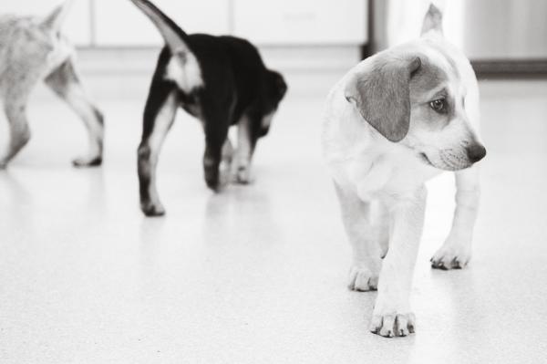 Hound mix puppies Best Friends Animal Sanctuary