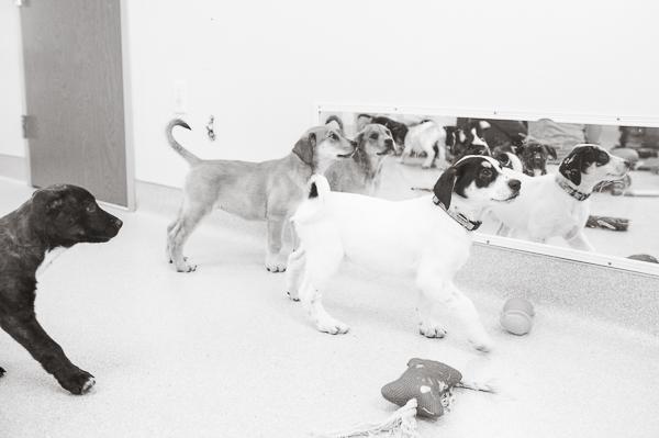 Puppies exploring Best Friends Animal Sanctuary, puppy preschool