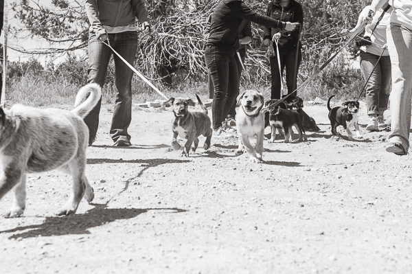 puppies first walk at Best Friends Animal Sanctuary