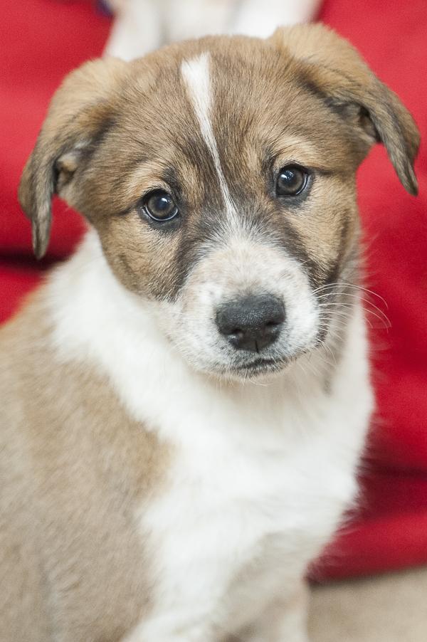 Adoptable puppy Best Friends Animal Sanctuary Puppy Preschool,#SaveThemAll