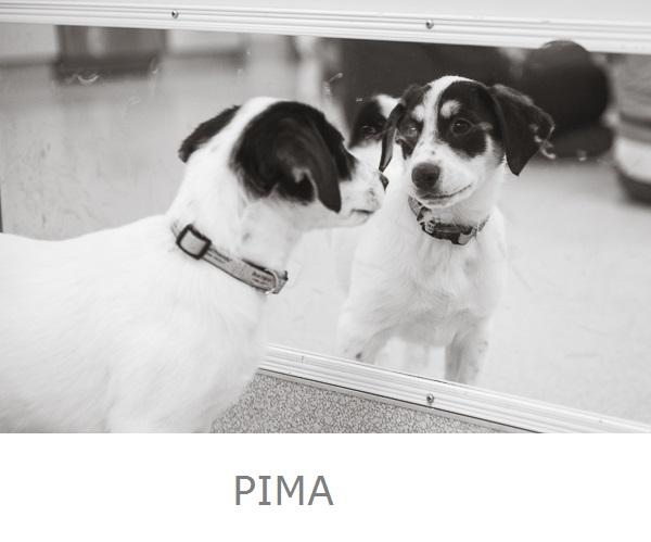 Puppy admiring self in mirror, Best Friends Animal Sanctuary