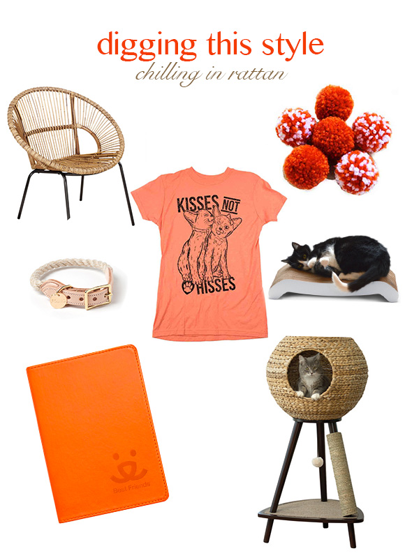 Caturday-Digging-This-Style-Chilling-In-Rattan, Adopt a Cat Month, rattan chair, cat pom pom toys, cat t shirt, cat sleeping on scratcher, journal, rope collar, rattan cat tree