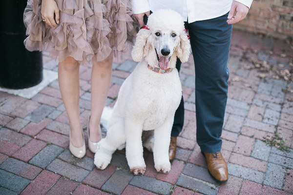 Engaging Tails:  Ella the Poodle