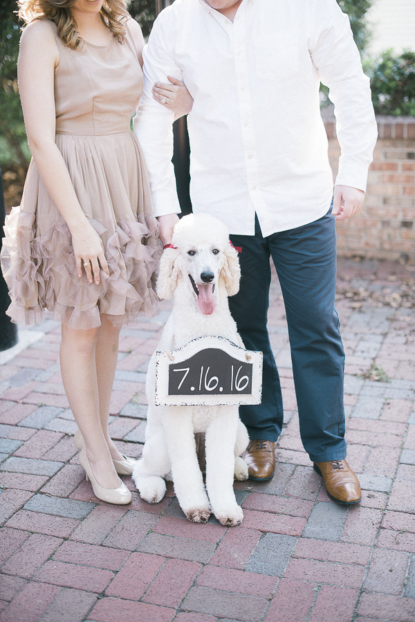 Poodle holding Save the Date Sign, engagement photos