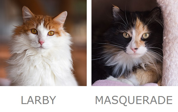 Larby & Masquerade Adoptable Cats from Best Friends Animal Sanctuary