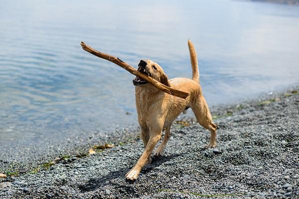 __Nunn_Other_Photography_Beach dog
