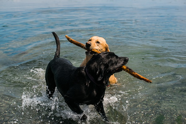 Happy Tails: Beach Dogs Karma and Gnarly