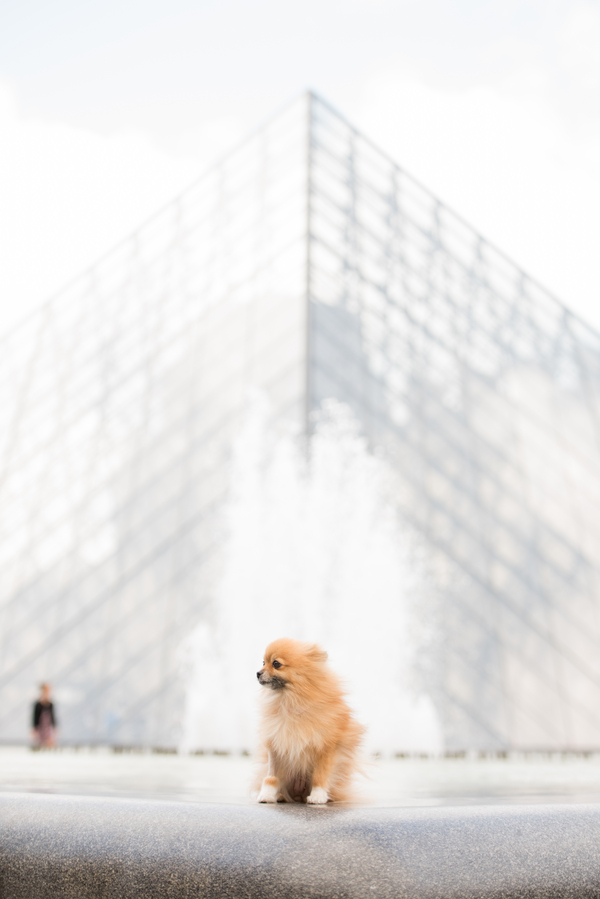 Pomeranian at Louvre, Paris, France