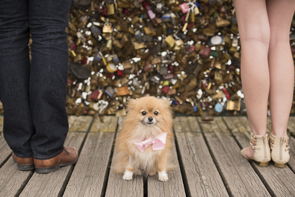 Engaging Tails:  Maia the Pomeranian in Paris