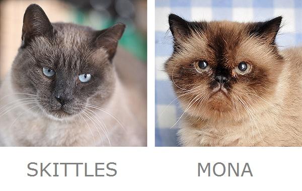 Skittles & Mona