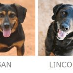 Susan, Lincoln Adoptable dogs Best Friends Animal Sanctuary