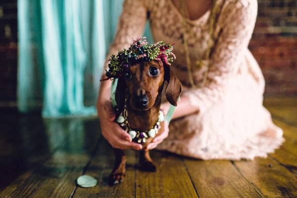 Doxie Wedding:  Chelsea & Hudson