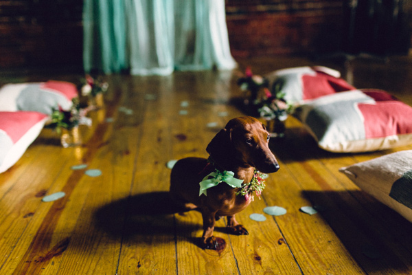 ©Danfredo Rivera Doxie wedding