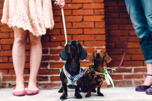 wedding dogs