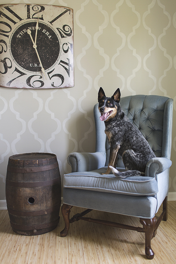 Amanda Ellis Photography | dogs on furniture