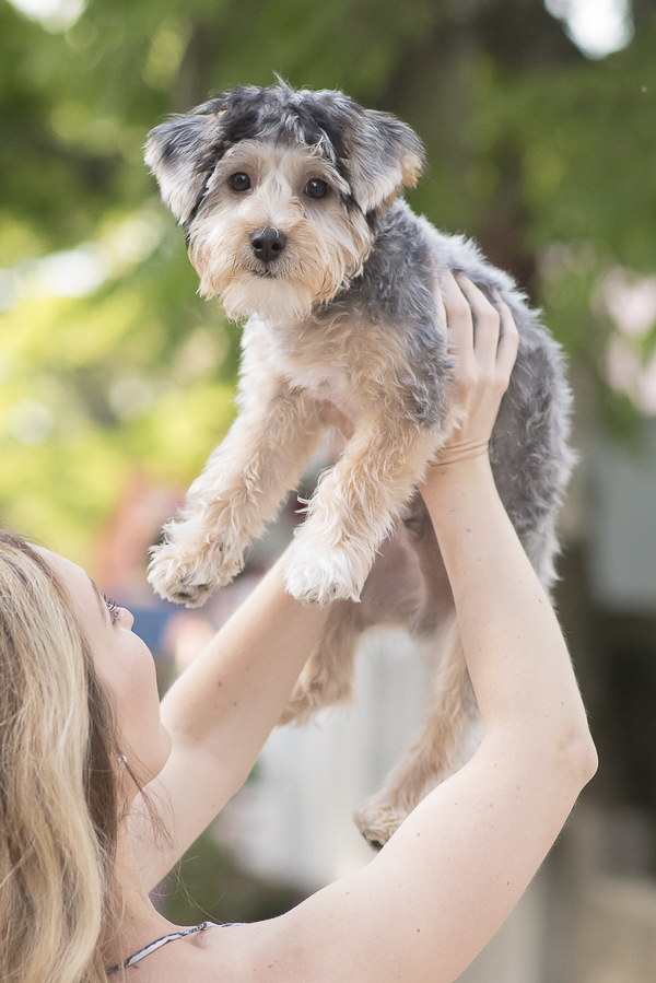 woman holding puppy above head, on location dog portraits