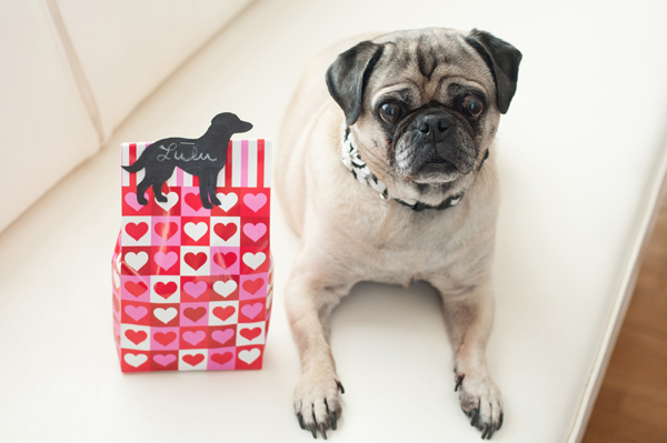 Pug sitting on white couch, treat bag for dogs