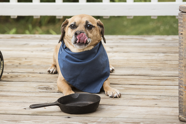 dog licking lips lying on deck with empty skillet