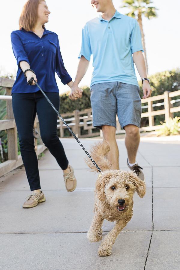 couple holding hands, walking Golden Doodle puppy