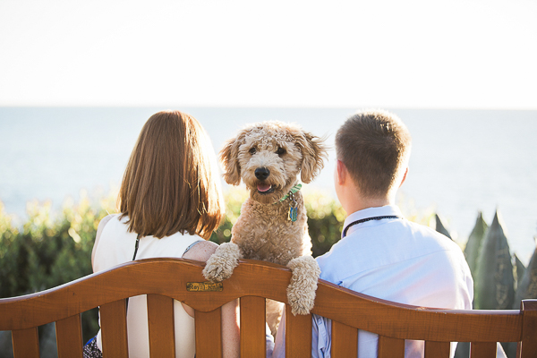 Golden Doodle puppy looking over back of bench, dog between woman and man on bench