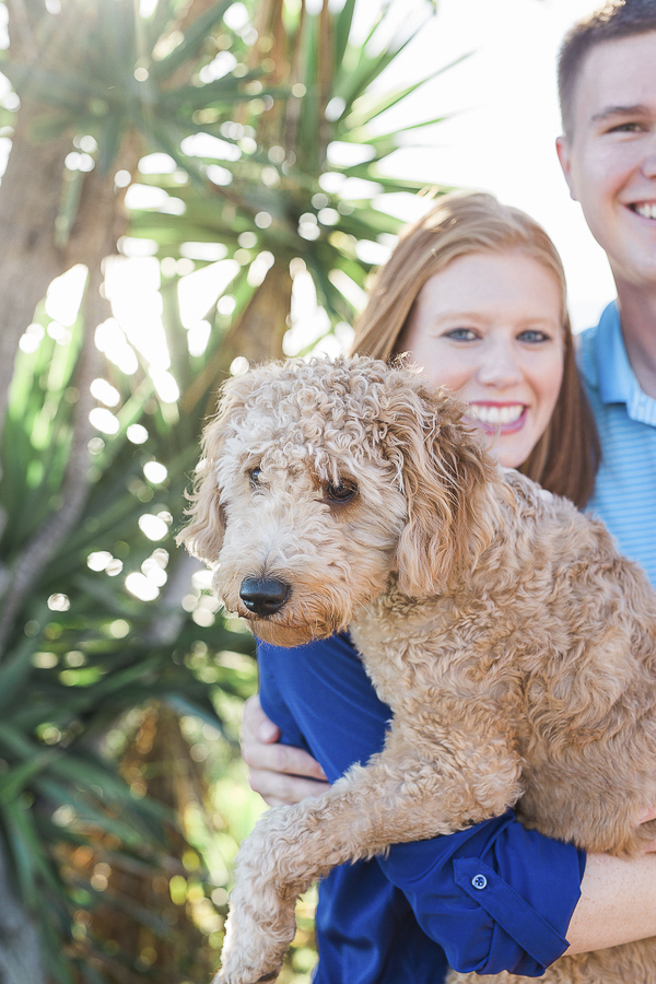woman holding Golden Doodle puppy, beach dog