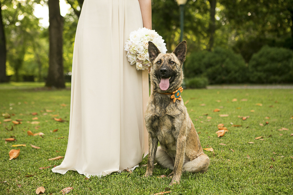 Best Dog:  Styled Wedding Shoot In Nashville