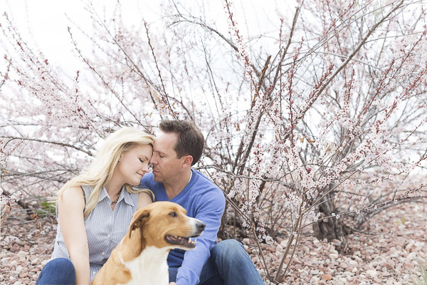 on location Colorado engagement photos with dog, brown white dog sitting with woman, man, flowering shrub