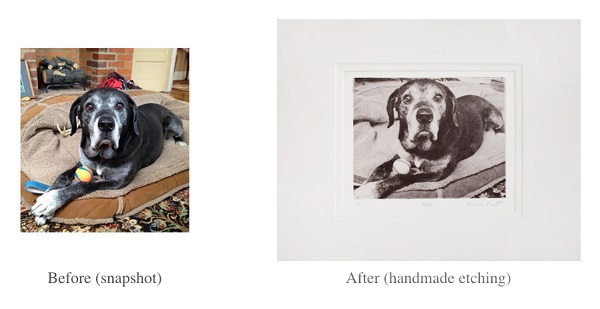 snapshot-fine art etching of senior black lab