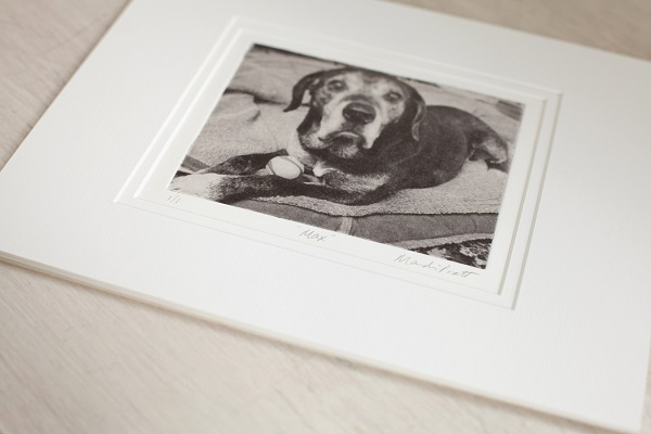 Spotlight:  Greyboy Pet Prints | Fine Art Etching