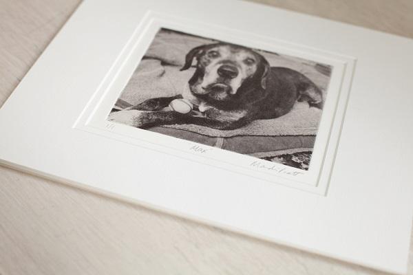 Spotlight:  Greyboy Pet Prints | Fine Art Etching