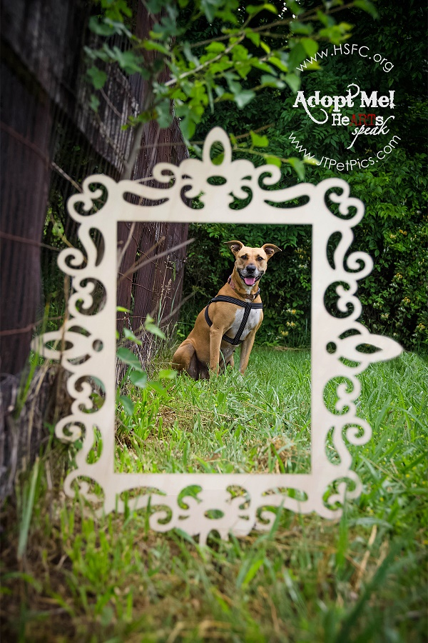 brown dog sitting in grass centered with picture frame