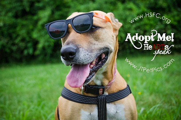adoptable dog wearing sunglasses- Adopt Jasmine