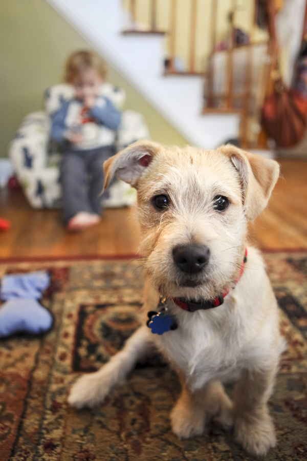 blond terrier mix puppy and toddler