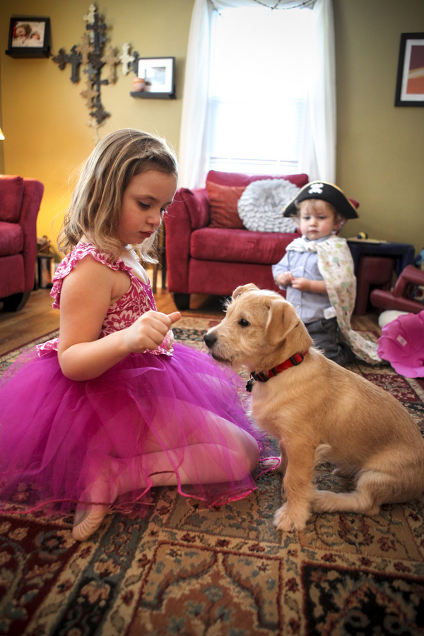 little girl giving treat to puppy, toddler dressed as pirate watching mixed breed pup