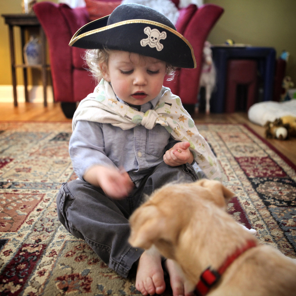 toddler dressed as pirate feeding treats to puppy