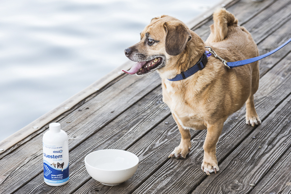 dog on dock looking at water, oral care for dogs