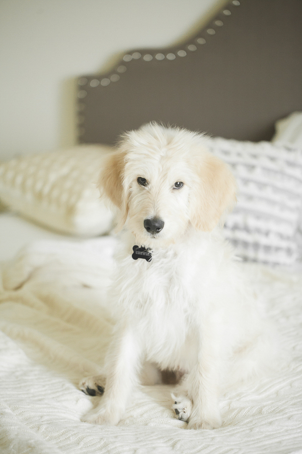 lifestyle puppy photos, dogs on furniture